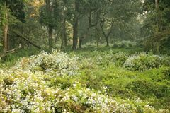 Wild flowers at Chilapata Royalty Free Stock Images
