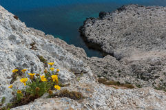 Wild flowers on cliffs. A bunch of yellow wild flowers on cliffs of Kavo Greco (Cape Greco) in Cyprus Royalty Free Stock Images