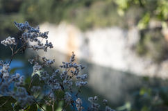 Wild Flowers on the Cliffs Edge Stock Images