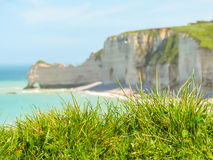 Wild flowers on the cliffs of Etretat, France Stock Photos