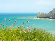Wild flowers on the cliffs of Etretat, France Stock Photo