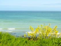 Wild flowers on the cliffs of Etretat, France Stock Photo