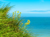 Wild flowers on the cliffs of Etretat, France Royalty Free Stock Photography