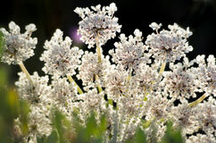 Wild Flowers Close Up, with blurry Background Royalty Free Stock Image