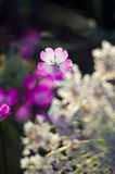 Wild Flowers Close Up, with blurry Background Stock Images