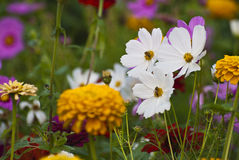 Wild flowers. A closeup of Wild flowers Royalty Free Stock Images