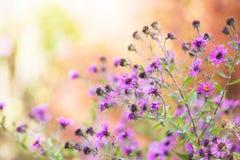 Wild flowers closeup Stock Image