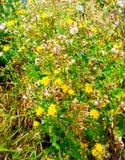 Wild flowers closeup texture Royalty Free Stock Image