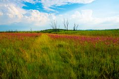 Wild flowers and cloudy skies in the late afternoon. royalty free stock photo