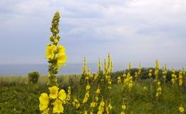 Wild Flowers on the Coast Stock Photo