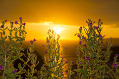 Wild flowers coastal sunset Stock Image