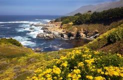 Wild Flowers, Coastline, Big Sur Royalty Free Stock Photos