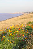 Wild flowers by coastline. Photo of beautiful wild flowers growing by the whitstable coastline in kent Royalty Free Stock Images
