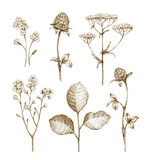 Wild flowers collection stock illustration