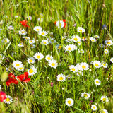 Wild flowers Stock Photo