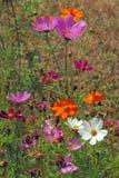 Wild Flowers. Stock Photo