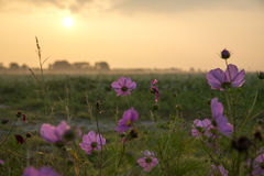 Wild flowers. The colours of the wild flowers are outstanding during sunrise stock photography