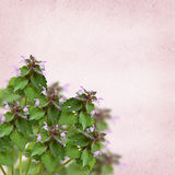 Wild flowers in a corner Royalty Free Stock Photography