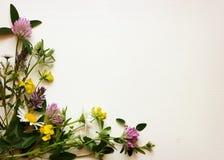 Wild flowers corner Stock Image