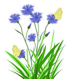 Wild flowers, cornflowers Stock Photos