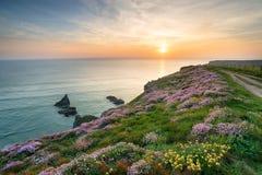 Wild Flowers on Cornish Cliffs Royalty Free Stock Image