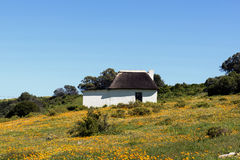 Wild flowers at a cottage Stock Photography