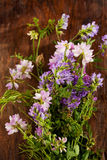 Wild flowers, crown vetch and tufted vetch Royalty Free Stock Image