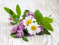 Wild Flowers Daisies and Clover Royalty Free Stock Images