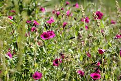 Wild flowers with defocused background Royalty Free Stock Photos
