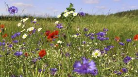 Wild flowers stock video footage
