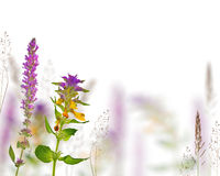 Wild flowers and dry plants isolated on white Stock Image