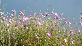 Wild flowers stock footage