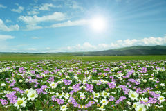 Wild flowers everywhere. Sunlight shining, Wild flowers everywhere royalty free stock image