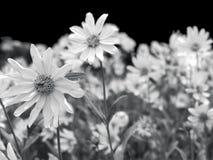 Wild flowers everywhere Stock Image