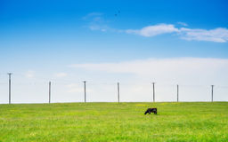 Wild flowers.Expanse for animals. Royalty Free Stock Photo