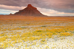 Wild flowers at Factory Butte, Royalty Free Stock Images