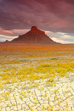 Wild flowers at Factory Butte, Stock Image