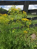 Wild Flowers by a Fence Stock Photo