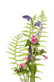 Wild flowers and ferns Stock Images