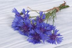 Wild flowers of the field cornflowers Royalty Free Stock Photo