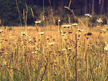 Wild flowers in a field royalty free stock photography