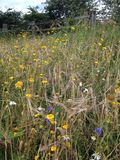 Wild flowers in a field Stock Photo