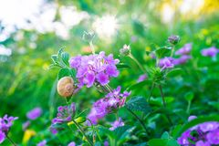 Wild flowers field Royalty Free Stock Images