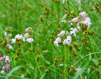 Wild flowers in a field. Royalty Free Stock Photos