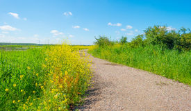 Wild flowers in a field in summer Stock Image