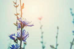 Wild flowers in a field at sunset. Royalty Free Stock Photos