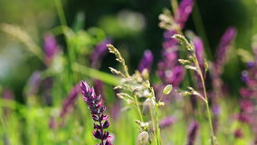 Wild flowers in the field waving on wind - closeup stock footage