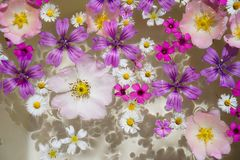Wildflowers floating. royalty free stock image