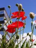 Wild Flowers in Flowerbeds in Burnley Lancashire Stock Photos