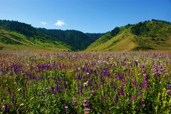 Wild flowers and forests Stock Photo
